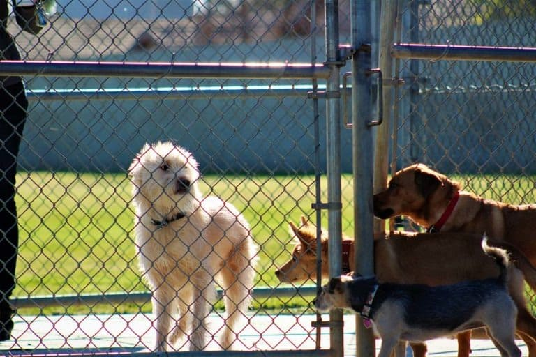 animal welfare challenges